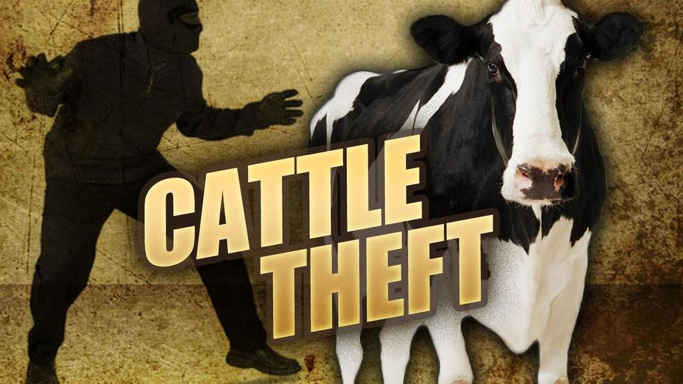 Court Orders Bexon Cow Thief To Attend Church Every Sunday