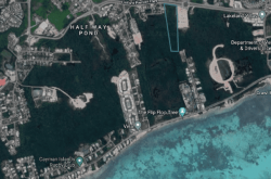 Mangroves face destruction for land survey