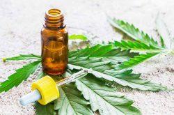 Senate passes Cannabis Amendment Bill