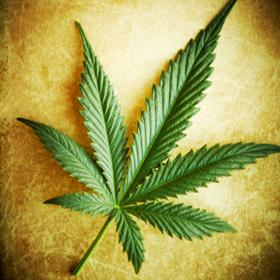 Personal and religious use first step to remove marijuana from Drug Act